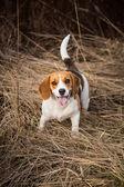 Dog looking at the camera — Stock Photo