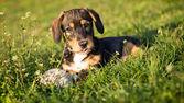 собака в траве — Стоковое фото