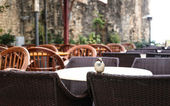Sparrow in Cafe — Stock Photo
