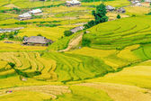 Rice terraces nearby the H'Mong ethnic groups — Stock Photo