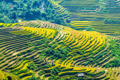 NIce mountainous rice fields — Stock Photo