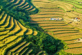 Harvest time in Northern Vietnam — Stock Photo