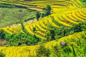 Paddy fields viewed from mountain peak — Stock Photo
