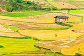 A romantic house in the middle of the ethnic terraces — Stock Photo