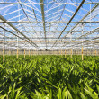 Stock Photo: Industrial green house