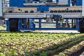 Planting machine for seedlings — Stock Photo