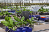 Orchid nursery in a green house — Stock Photo
