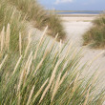 Dutch sand dunes — Foto Stock