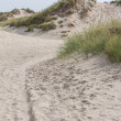 Dutch sand dunes — Stockfoto