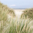 Dutch sand dunes — Foto de Stock