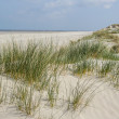 Sand dunes at the coast of Holland — Stock Photo #38985753