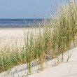 Sand dunes at the coast of Holland — Stock Photo