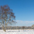 Winter snow landscape in Holland — Stock Photo