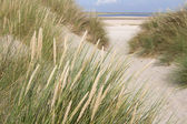 Dutch sand dunes — Stock Photo