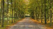 Landscape with lane in beautful autumn colors — Stock Photo
