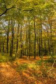 árboles en colores otoñales — Foto de Stock