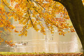 Autumn background framed with leaves — Stock Photo