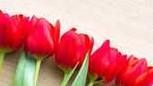 Red tulips arrangement — Stock Photo