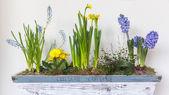 Spring flower arrangement — Stock Photo