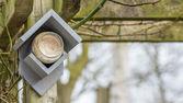 Feeding birds with peanut butter — Stock Photo