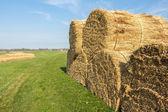 Landscape with thatch sheaf on the farmland — Stockfoto