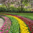 Flowerbed in spring with bulbs — Stock Photo #46020351