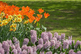 Flowerbed in spring with bulbs — Stock Photo