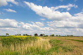 Dutch wild landscape rapeseed — Stock Photo