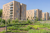 Urban greening — Stock Photo
