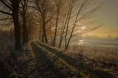 Captivating winter landscape — Stock Photo