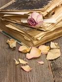 Dry rose and books — Φωτογραφία Αρχείου