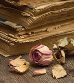 Dry rose and old books — Zdjęcie stockowe