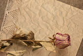 Dry rose on old creased paper — Stockfoto