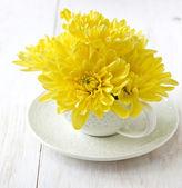 Gelbe chrysantheme — Stockfoto
