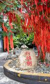 The Chinese Money Tree — Stock Photo