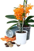 Transplant orchids — Stock Photo