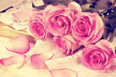 Roses roses — Photo
