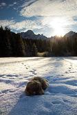 Pies w śniegu — Zdjęcie stockowe