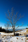 Isolated tree in a cold december morning — Stockfoto