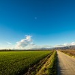Country road between the fields — Stock Photo