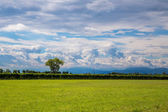 Grapevine in the fields of italy — Stock Photo