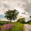 Lonely tree on a country road — Stock Photo #50693863