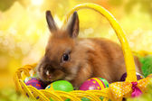 Funny little rabbit among Easter eggs in basket — Stock Photo