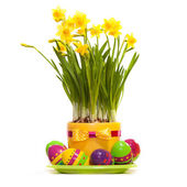Easter eggs with spring flower in the pot — Photo