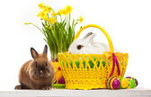 Two little rabbits among Easter eggs in basket — 图库照片
