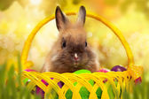 Easter bunny with eggs in a basket — Stock Photo
