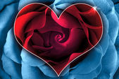 A heart of a rose — Stock Photo