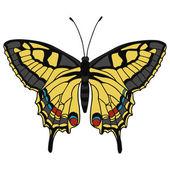 孤立的蝴蝶矢量图. — 图库矢量图片