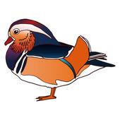 Mandarin duck male isolated vector illustration — Stockvektor