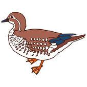 Mandarin duck female isolated vector illustration — Stock Vector